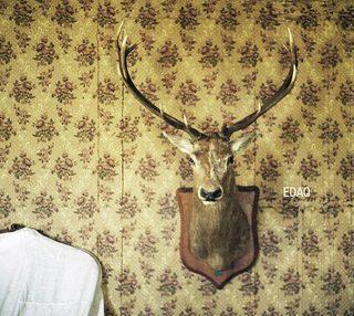 Dalla parte del cervo: il disco d'esordio degli Edaq
